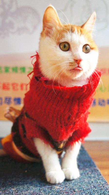 只励志治愈系正能量猫咪的