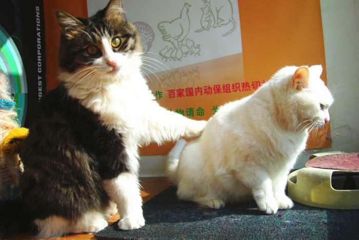 励志治愈系正能量猫咪的