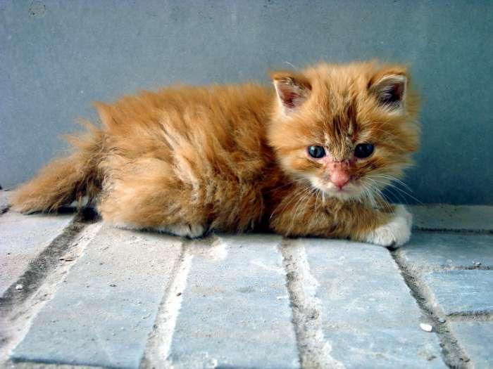 励志治愈系正能量猫咪的】