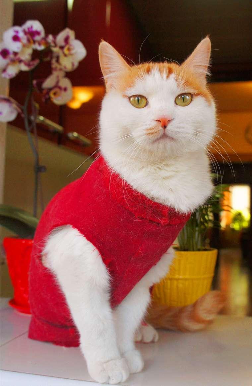 原创萌图来袭!励志猫lucky99和小伙伴们贺新年啦!