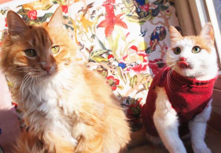 励志猫lucky99和小伙伴们贺新年啦!